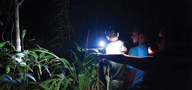 Tortuguero Forest Night Walk
